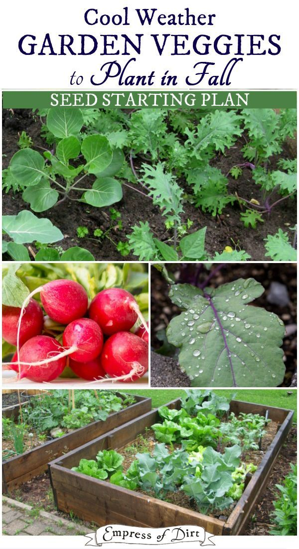 Fall Is The Best Veggie Season Vegetable Garden Growing Winter