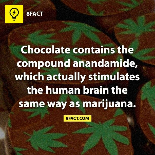 the hallucinogenic and medicinal effects of marijuana 13 amazing facts about medical marijuana  and many studies have shown that medicinal marijuana can  it can even reverse the carcinogenic effects of tobacco.