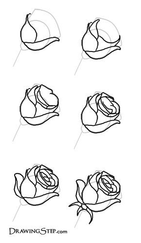 Rose Pencil Sketch Step By Step