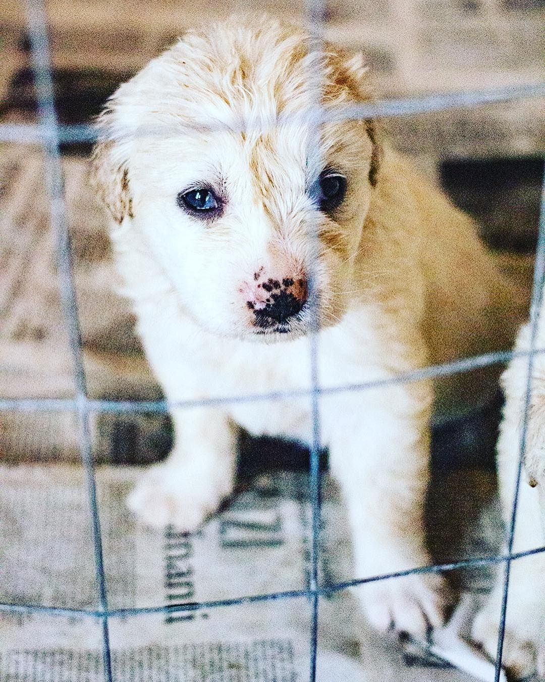 Instagram emptycages_photography // This puppy was 40