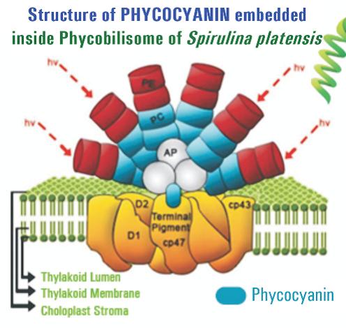 Phycocyanin Spirulina Spiruline