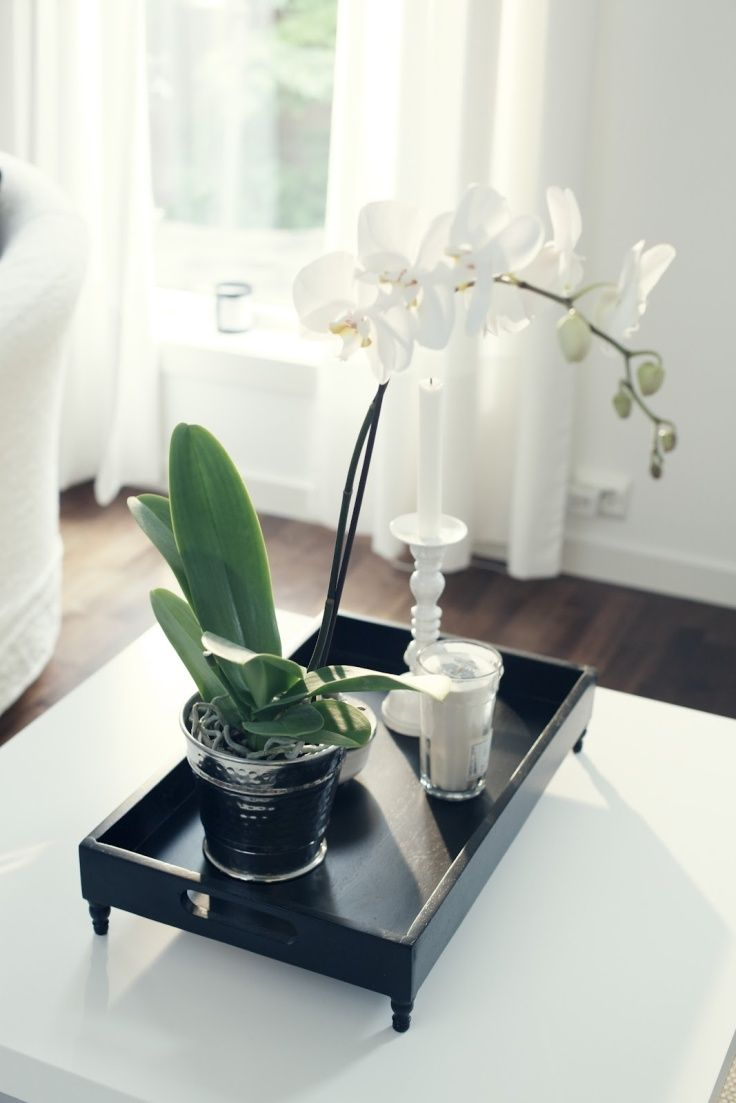 Decoraci n del hogar orqu deas phalaenopsis decoraci n - Bandejas decoracion salon ...