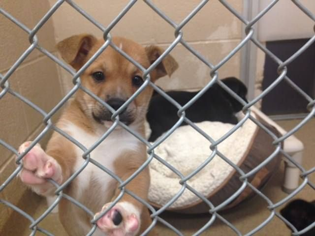 Mercer County Pa Animal Shelter Code Red Urgent 50 Dogs Puppies Need Your Help Out Of Time Monday Dec 15th Pl Animal Shelter Adoption Animals
