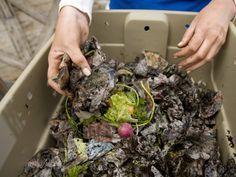 Aprende a preparar compost de lombriz....