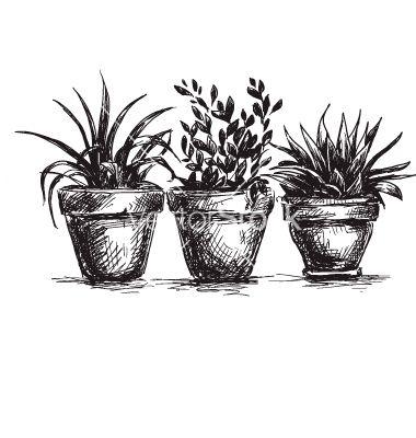 Flower pots vector - by kamenuka on VectorStock®