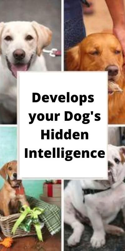 Develops your Dog's