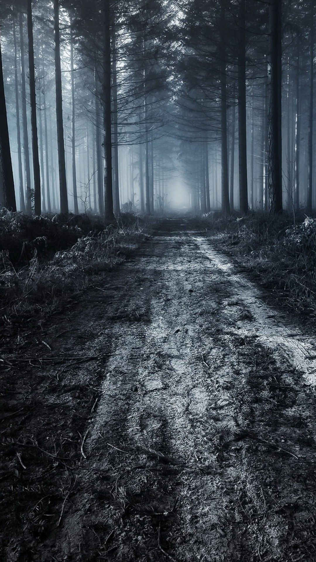 Scary Forest Wallpapers 09 Best Free Scary Forest Hd Wallpaper For Pc Scary Forest Scary Woods Forest Wallpapers