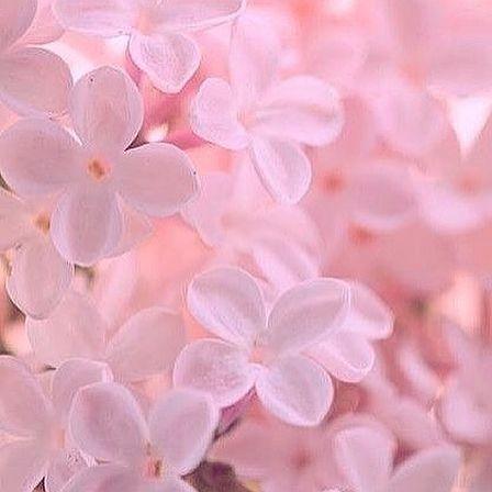 pin von caitlyn vilar auf pastel aesthetic pinterest rosa farben und bilder. Black Bedroom Furniture Sets. Home Design Ideas