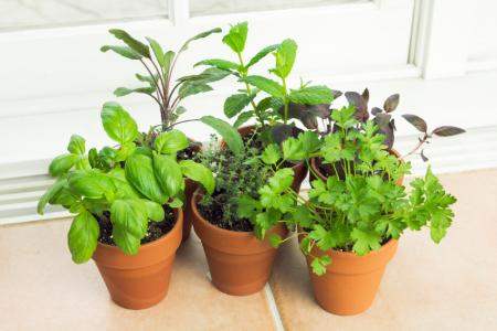 How to Grow Herbs Indoors | DoItYourself.com