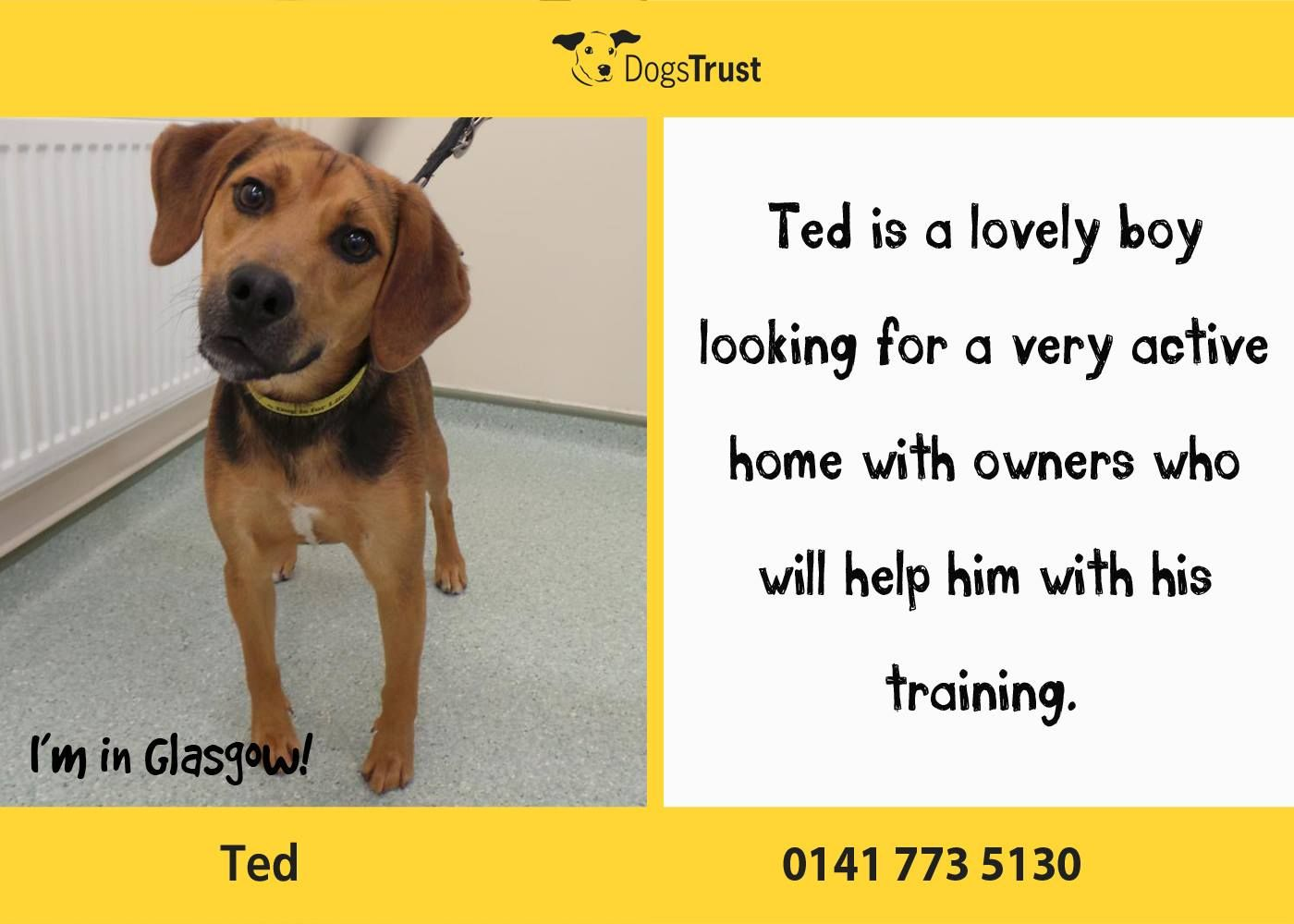Ted At Dogs Trust Glasgow Is A Lovely Boy His Full Of Beans And Energy He Loves To Be On The Go All The Time Learning New Things And Going