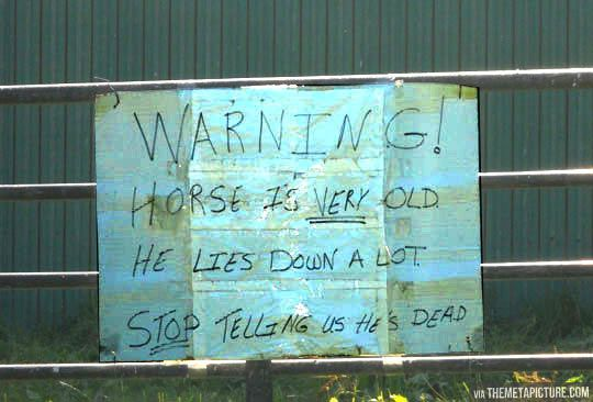 Please, stop bothering us\u2026 Pinterest Horse, Humor and Stuffing - why sop is used