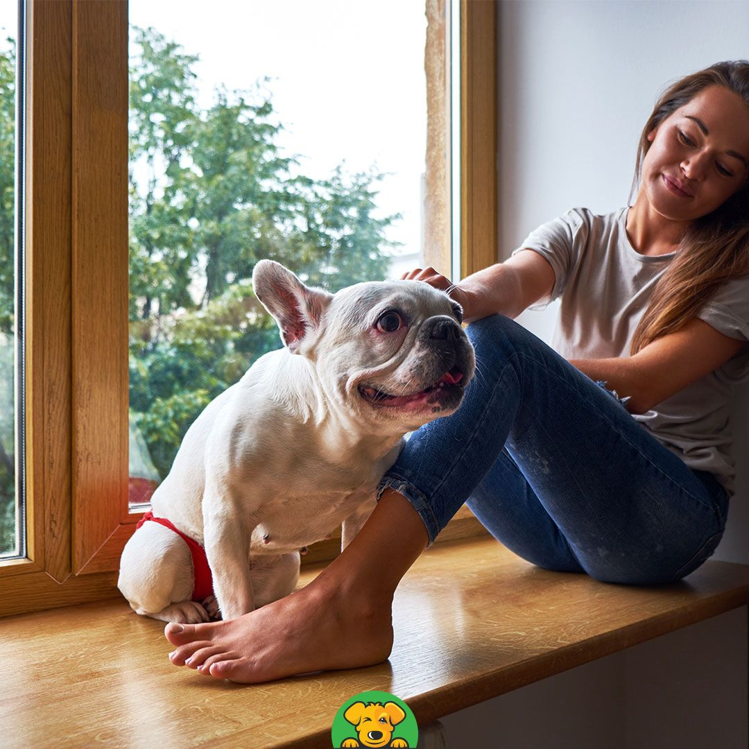 Dog Friendly Hotel In 2020 Dog Friendly Hotels Pet Friendly Hotels Flying With Pets