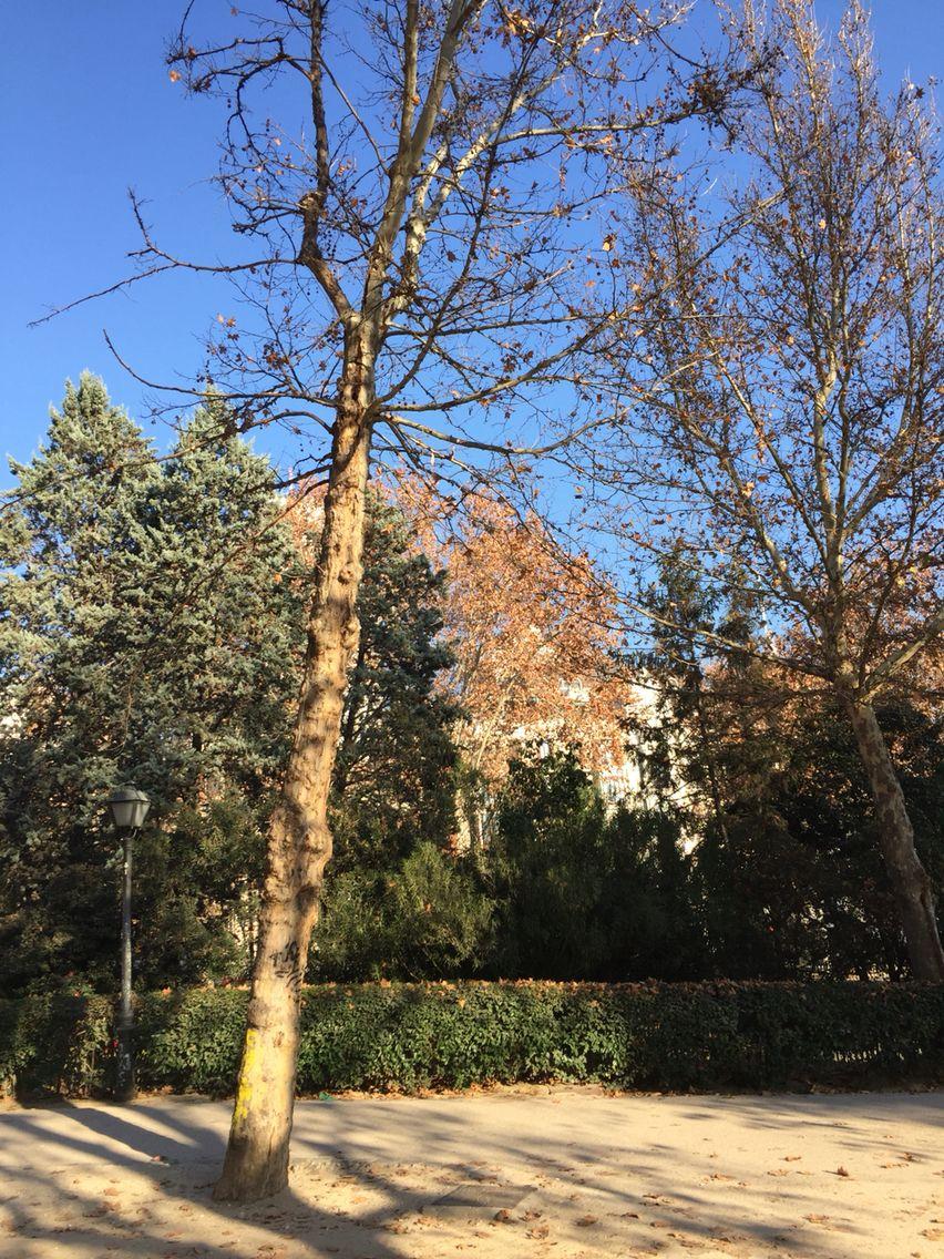 Parque de la Montaña # Madrid