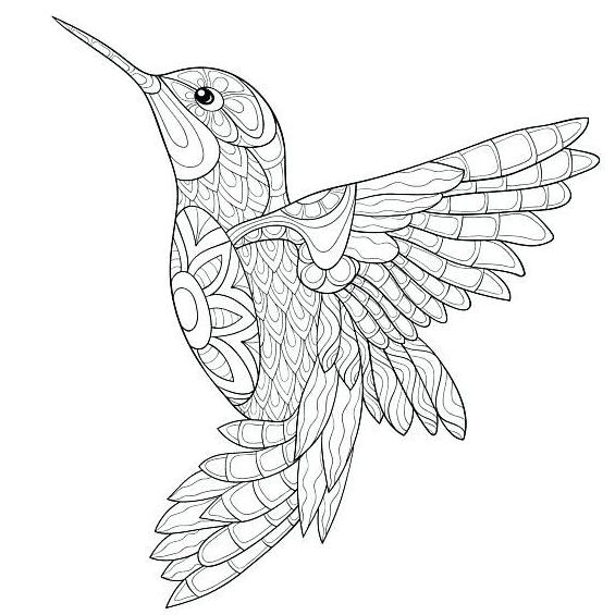 mandalas färbung  vogel malvorlagen kolibri zeichnung
