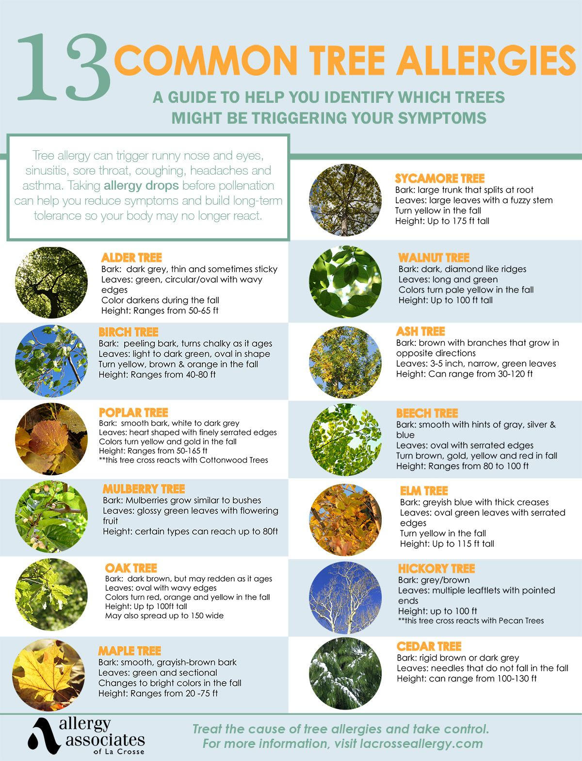 Tree Pollen Allergy Symptoms Treatment Tree Allergies Pollen Allergies Allergies