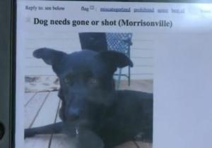 Missouri Woman Saves Dog Whose Owner Threatens On Craigslist To Shoot Him Dogs Animal Advocacy Dog Adoption