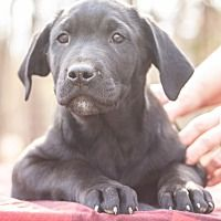 Available Pets At For Dogs Sake In Manchester New Hampshire Dogs Help Homeless Pets Dog Ages