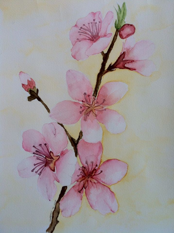 Cherry blossom watercolor my paintings pinterest for Simple cherry blossom painting