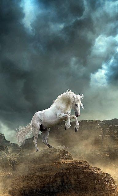 beautifu horse