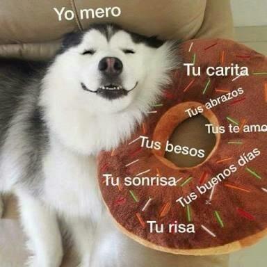 Meme Husky Expertoanimal Mundoanimal Reinoanimal Animales Naturaleza Mascotas Animale Memes Romanticos Amor Gracioso Memes Para Mi Novio