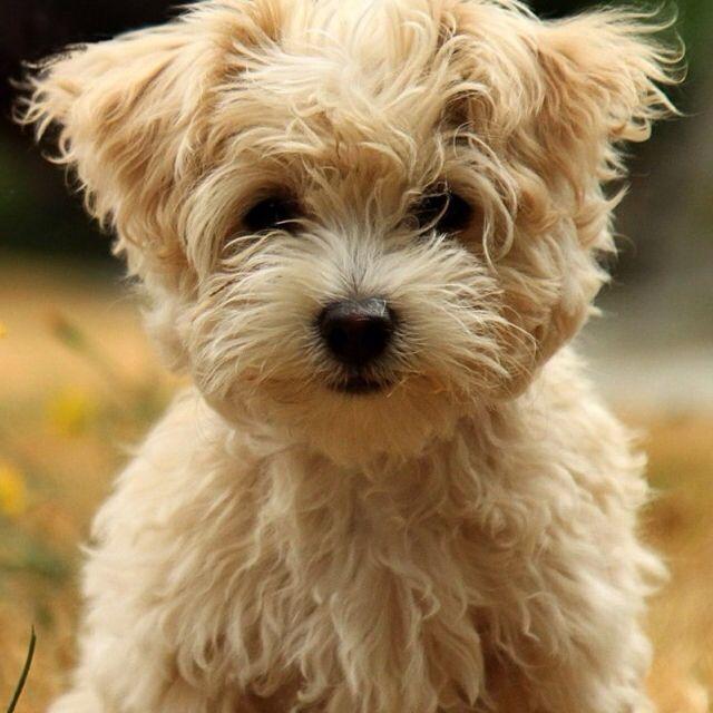A dog!!!!!