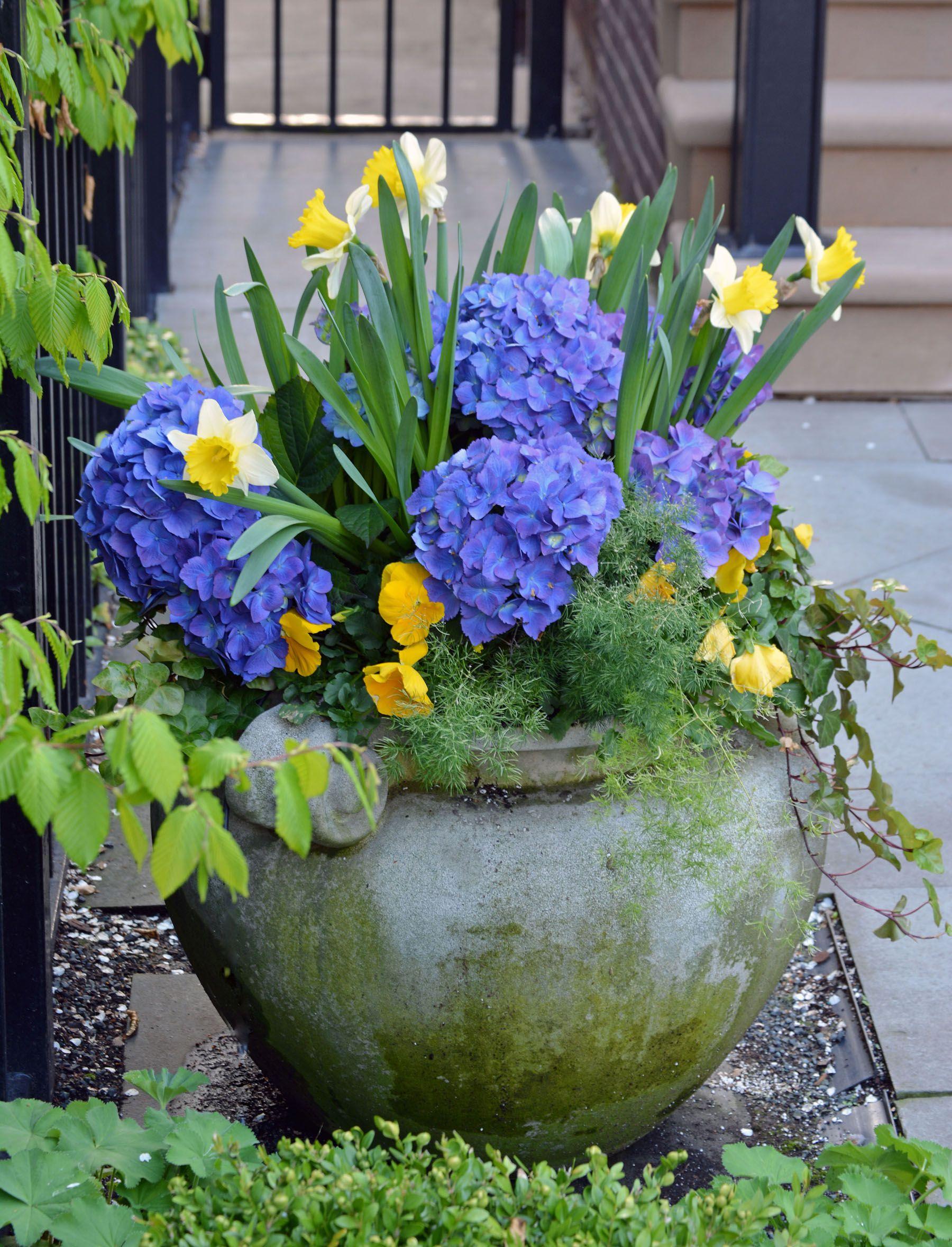 Urban gardening planters - Spring Annuals Planter Container Urban Garden Landscape Design Ideas