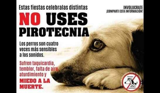 No A La Pirotecnia Derechos De Los Animales Animales Amor De Perro