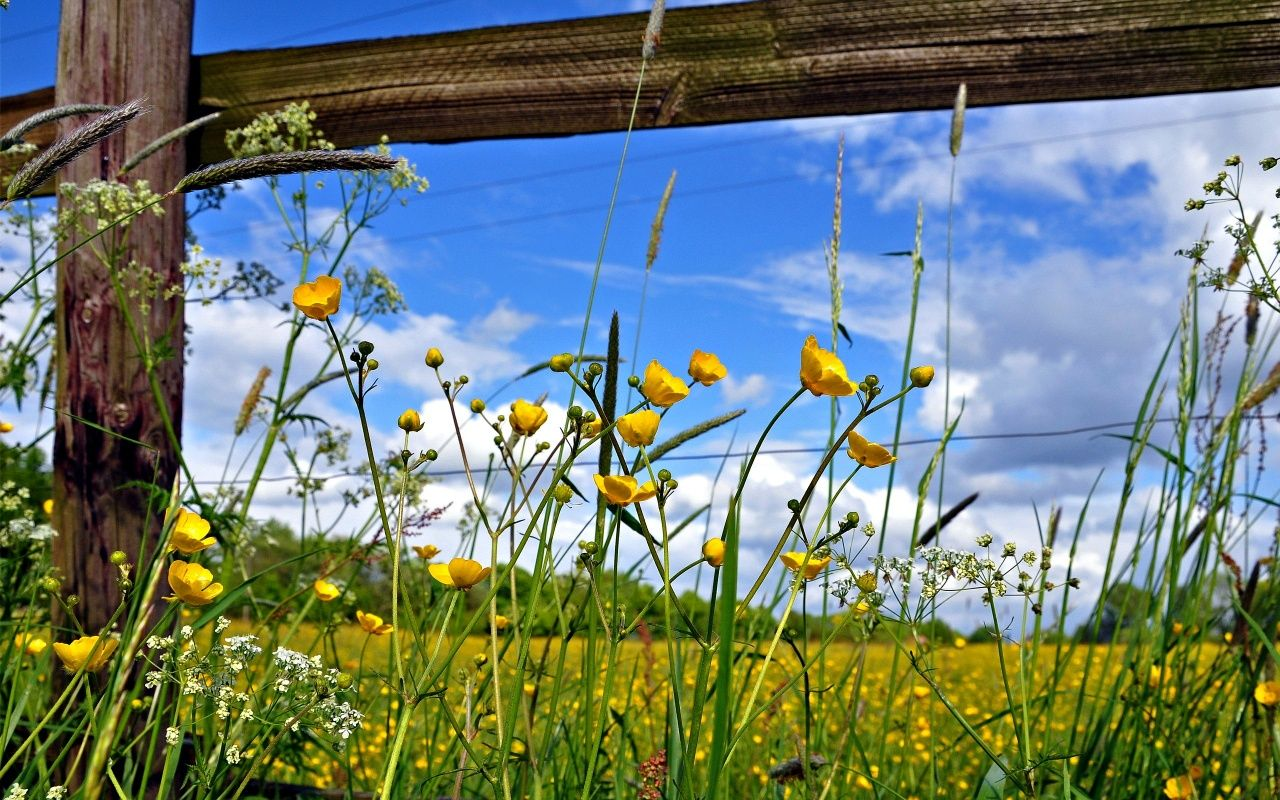 Pasture Fence Flowers Wallpaper In 1280x800 Wallpapers Pinterest