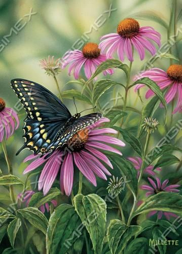 915 by Rosemary Millette | Butterflies | Imagimex - Beautiful Greeting Cards