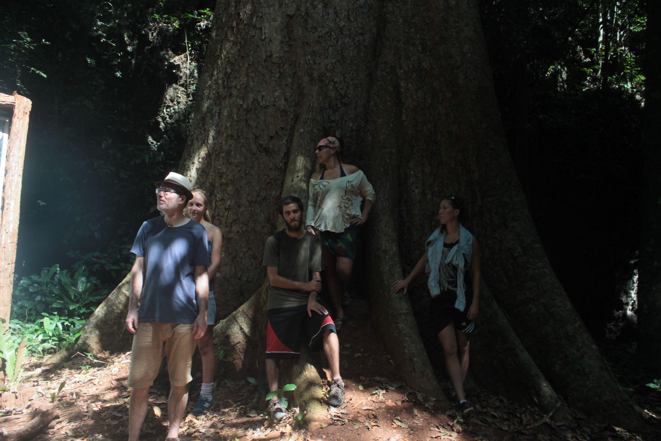 Perdidos en el Big Tree