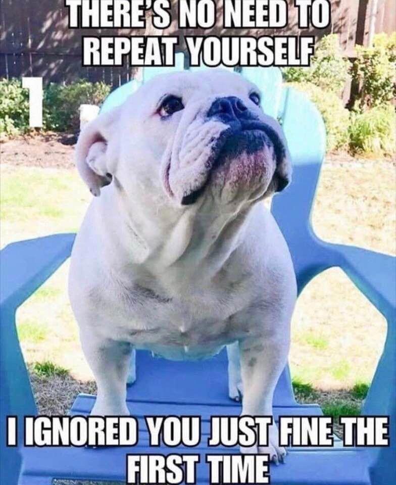 French Bulldog Fawn Bulldog Ingles Divertido Memes Divertidos Sobre Perros Bulldog