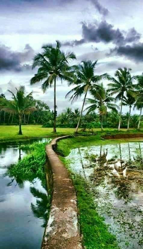 Kerala Beautiful Landscape Photography Village Photography Natural Scenery