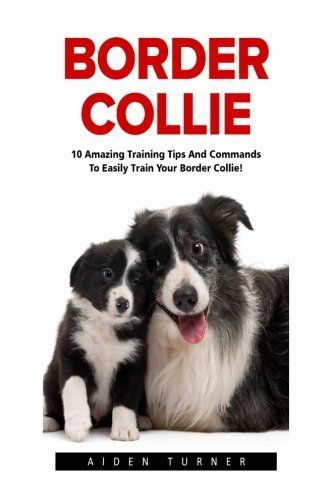 Border Collie 10 Amazing Training Tips And Commands To Easily