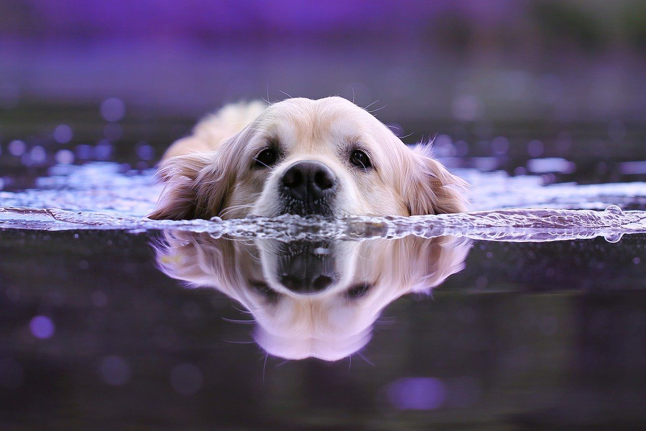This Guy Knows Some Dog Tricks Swimming Here Is A Dog Tip Let
