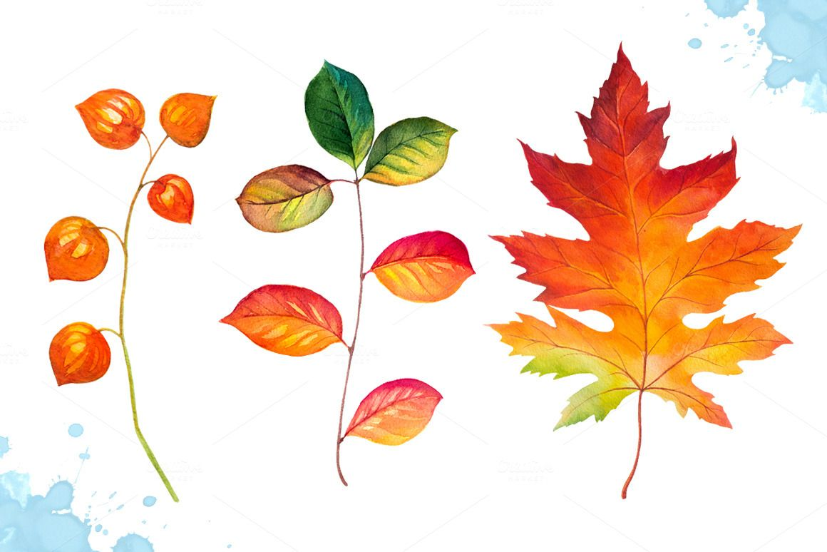 Autumn leaves. Watercolor set. by AlexGreenArt on @creativemarket