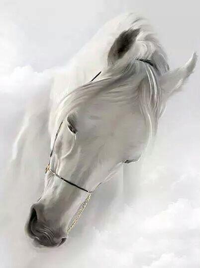 Bits Pieces Slices Of Life Horses White Horses Beautiful Horses
