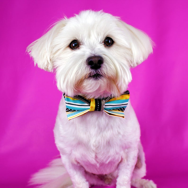 Pin On Our Dog Bow Ties