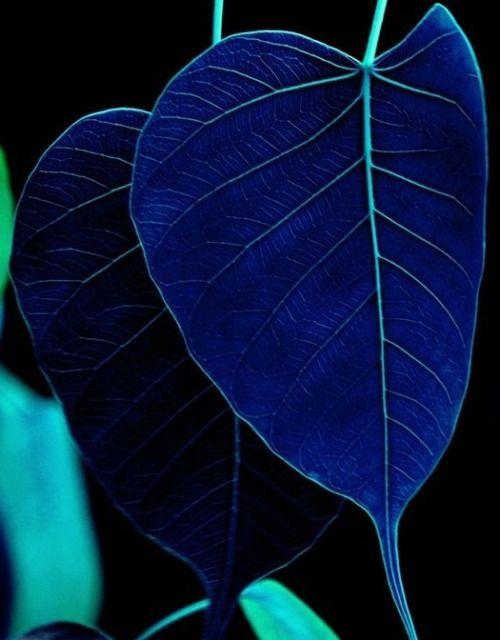 Color, color, color!! | Colores de la naturaleza | Pinterest | Azul ...