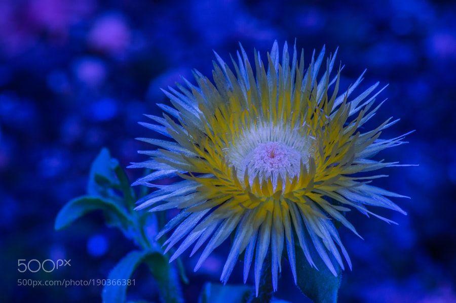 light-blue-yellow by monorigabor60