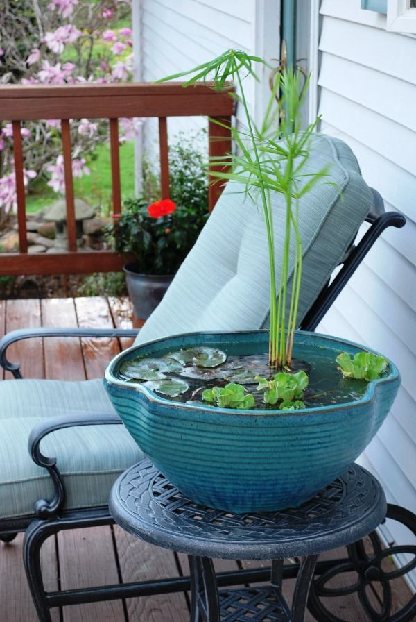 Inspiring Small Garden Water Features Ideas How Nice This Small Tabletop Water Garden Indoor Water Garden Water Features In The Garden Container Water Gardens