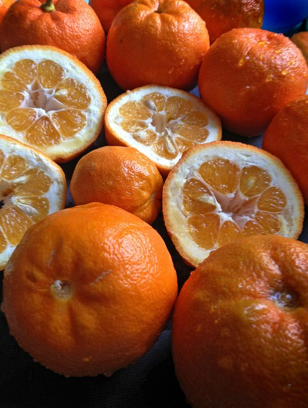 Seville oranges to make marmalade