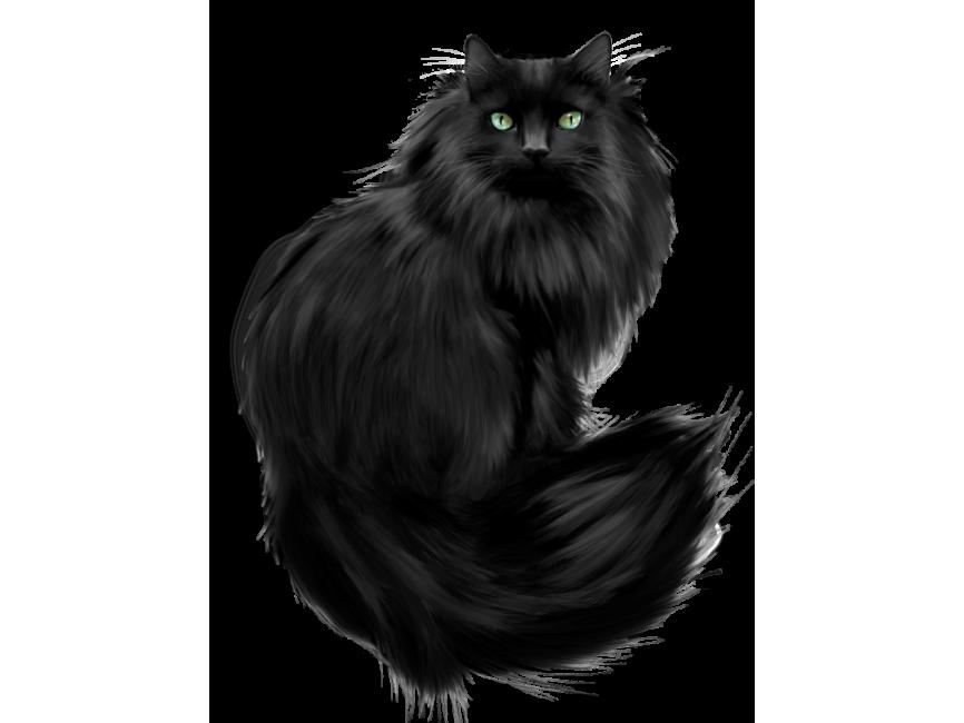 Black Cat Png Transparent Image Freepngimage Com Black Cat Cats Png