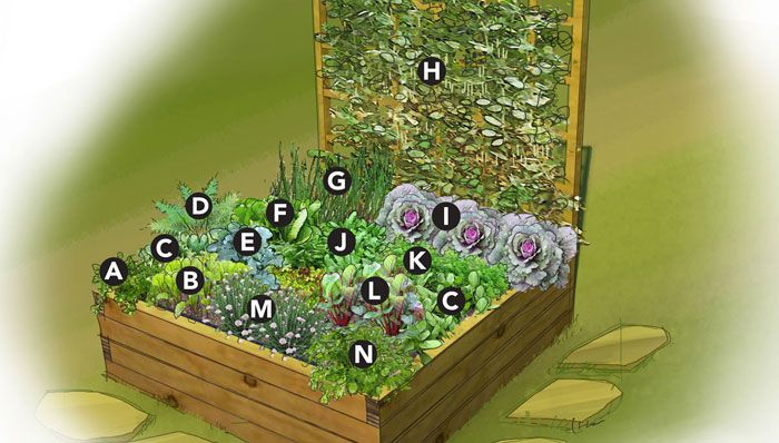 Garden plan for 4x4 bed of vegetables and herbs i 39 ve for Vegetable garden box layout