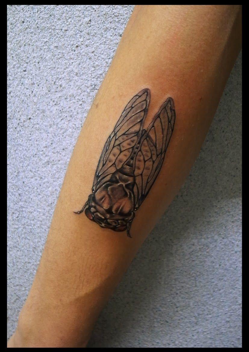 Google Tattoo: Cicada Tattoo - Google Search