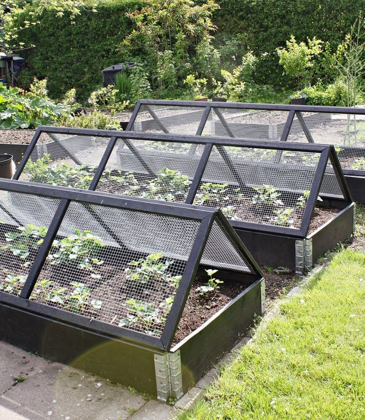 Potager Garden Design Ideas: What Is The Benefits Of Having A Greenhouse