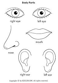 Resultado de imagen de parts of the body printables