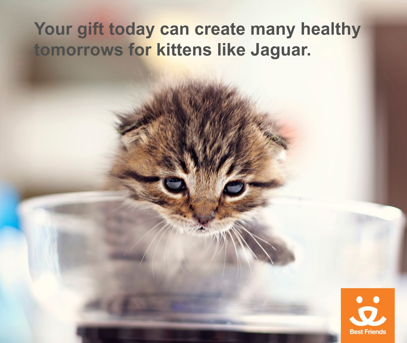 Jaguar Was One Of More Than 1 600 Newborn Kittens Saved Through Our Nurseries This Year Make A Gift Today To Help Others L Animal Society Kittens Best Friends