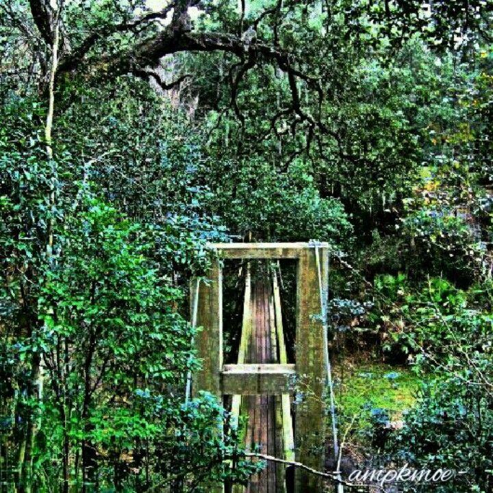 Ravine Gardens State Park, Palatka, FL. THE SWINGING BRIDGE ...