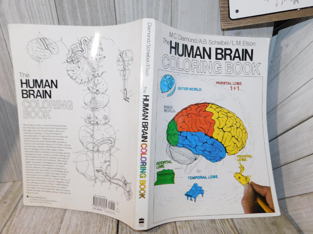 Vintage The Human Brain Coloring Book Mc Diamond 1985 Etsy Coloring Books Human Brain Health Books