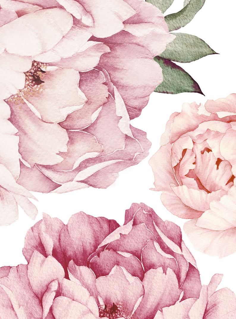 Peony Flowers Wall Sticker, Mixed Pink Watercolor Peony Wall Stickers - Peel and Stick Removable Stickers